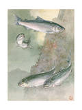 Painting of Chinook Salmon, Above, and Silver Salmon, Below Photographic Print by Hashime Murayama