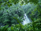 Ayung River Bends Through the Lush Dense Tropical Jungle Photographic Print by  xPacifica