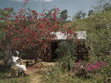 Woman Sits by Luxuriant Bougainvillea Blossoms by Her Small House Photographic Print by Edwin L. Wisherd
