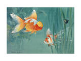 Oranda and a Scaleless Nymph Swim Together Photographic Print by Hashime Murayama