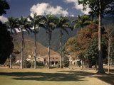 Palm Trees Line the Caracas County Club Photographic Print by Luis Marden