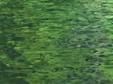 Water with Green Reflection Photographic Print by Nick Norman