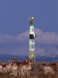 Herd of Pronghorns Graze Near a Natural Gas Drilling Rig Photographic Print by Joel Sartore