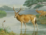 This Painting Depicts Milu Deer Standing in Water Photographic Print by Walter Weber