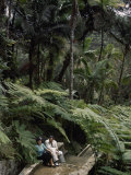 Giant Ferns in the El Yunque Rain Forest Form Natural Arcades Photographic Print by Edwin L. Wisherd