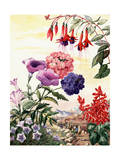 Portrait of Flowers Native to South America Giclee Print by Else Bostelmann