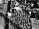 Men Work to Load a Ship Taking Watermelons to Baltimore Photographic Print by Edwin L. Wisherd