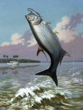 Tarpon Caught on Hook Leaps Out of Water, Fishing Boat Floats Nearby Photographic Print by Walter Weber