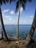 Palms on Green Beach on Vieques Island, Puerto Rico Photographic Print by Scott Warren