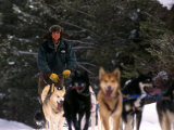 Dog Musher Shouts Commands to His Sled Dogs Photographic Print by Kate Thompson