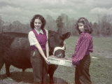 Teen Girls Feed an Aberdeen-Angus Bull Fat-Forming Sweet Potatoes Photographic Print by Joseph Baylor Roberts