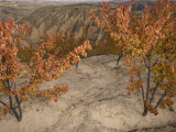 Agricultural Land Restoration in the Loess Plateau Photographic Print by Jim Richardson