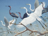 Herons and Egrets Perch on Branches and Fly into Blue Sky Photographic Print by Walter Weber