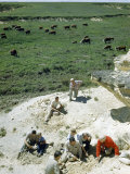 People Excavate the Spine of an Extinct Mosasaur on a Prairie Pasture Photographic Print by Jack Fletcher