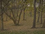 Fall Foliage on Staten Island, Ny Photographic Print by Joel Sartore