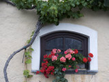 Red and Pink Flowers Grow Outside Outside a Window Photographic Print by  Keenpress