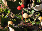 Alaskan Ground Cover of Mosses, Berries, Mushrooms and Fungi Photographic Print by George Herben