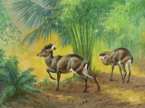This Painting Depicts Michie's Tufted Deer in a Forest Photographic Print by Walter Weber