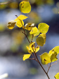 Close View of Leaves on a Branch Reproduction photographique par Paul Damien