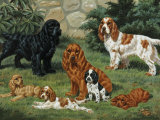 Portrait of American Cocker Spaniels of Three Color Classes Photographic Print by Walter Weber