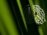 Orb-Weaving Spider Sitting in it&#39;s Web Photographic Print by Mattias Klum