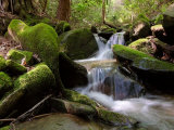 Waterfalls of a Woodland Stream Tumble over Moss-Covered Boulders Photographic Print by  White & Petteway