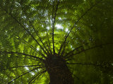 Looking Up into the Canopy of a Palm Tree Photographic Print by Mattias Klum