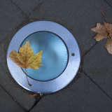 Still Life Overhead View of Leaf and Blue Street Light Photographic Print by Keenpress