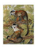 Painting of Squirrel Monkeys in a Tree Photographic Print by Elie Cheverlange