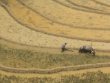 Farmer Plowing His Water Filled Rice Terrace Photographic Print by Jim Richardson