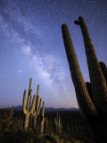 Stars and the Milky Way Above a Hillside of Saguaro Cactus Photographic Print by Jim Richardson