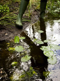 Person in Boots Standing at the Edge of a Pond with Water Lily Pads Photographic Print by Mattias Klum