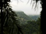 Fog Shrouded Mountains in Malaysia's Rain Forest Photographic Print by Mattias Klum