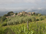 Wine Fields and Olive Groves in Foreground Photographic Print by  Keenpress