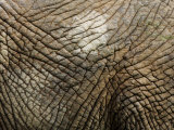 Close Up of the Skin of an African Elephant Fotografisk tryk af Mattias Klum