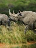 Pair of Rhinoceroses Photographic Print by Mattias Klum
