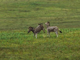 Pair of Zebras Interacting on the Plains Photographic Print by Mattias Klum