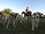 Group of Dogs and a Man on Horseback Await the Start of a Fox Hunt Photographic Print by Scott Sroka