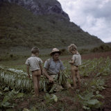 Boys Watch their Father Cut and Tie Tobacco Leaves in a Field Photographic Print by Melville Grosvenor