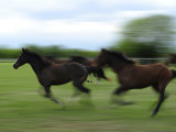 Galloping Horses at a Ranch Photographic Print by Raul Touzon