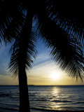 Silhouetted Palm Tree and Gentle Surf at Twilight Photographic Print by Mattias Klum