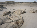 Unusual Rocks in the Bisti Badlands Wilderness Photographic Print by Scott Warren