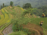 Farmers Harvest Rice from their Terraces to Make a Meager Living Photographic Print by Jim Richardson