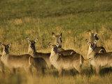Group of Mammals Looking at the Camera Photographic Print by Mattias Klum