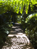 Boardwalk in Dappled Sunshine Photographic Print by Stacy Gold