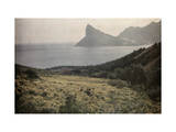 Field of Daisies and Marigolds Lies Along the Cape Peninsula Photographic Print by Melville Chater