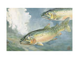 Painting of a Pair of Yellowstone Trout, a Species of Cutthroat Photographic Print by Hashime Murayama