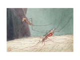 Close-up of a Female Mosquito Biting a Man's Arm Photographic Print by Hashime Murayama