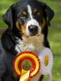 Portrait of an Award Winning Dog with it's Ribbons Photographic Print by Mattias Klum