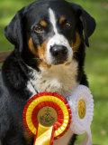 Portrait of an Award Winning Dog with it's Ribbons Photographic Print by Mattias Klum